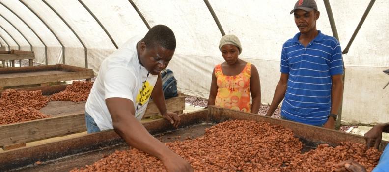 Un producteur de cacao venu d'Haïti pour la quinzaine !