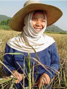 Productrice riz thailande